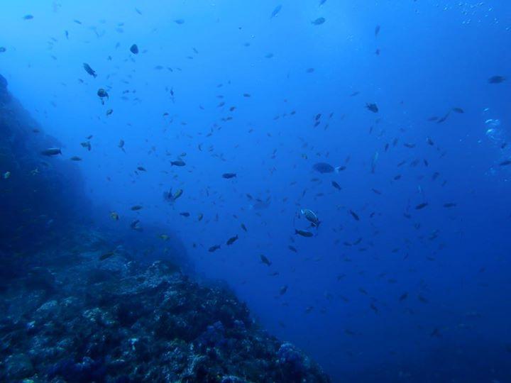 初島、熱海、神子元、伊豆海洋公園のダイビングなら伊豆ダイビングスクール