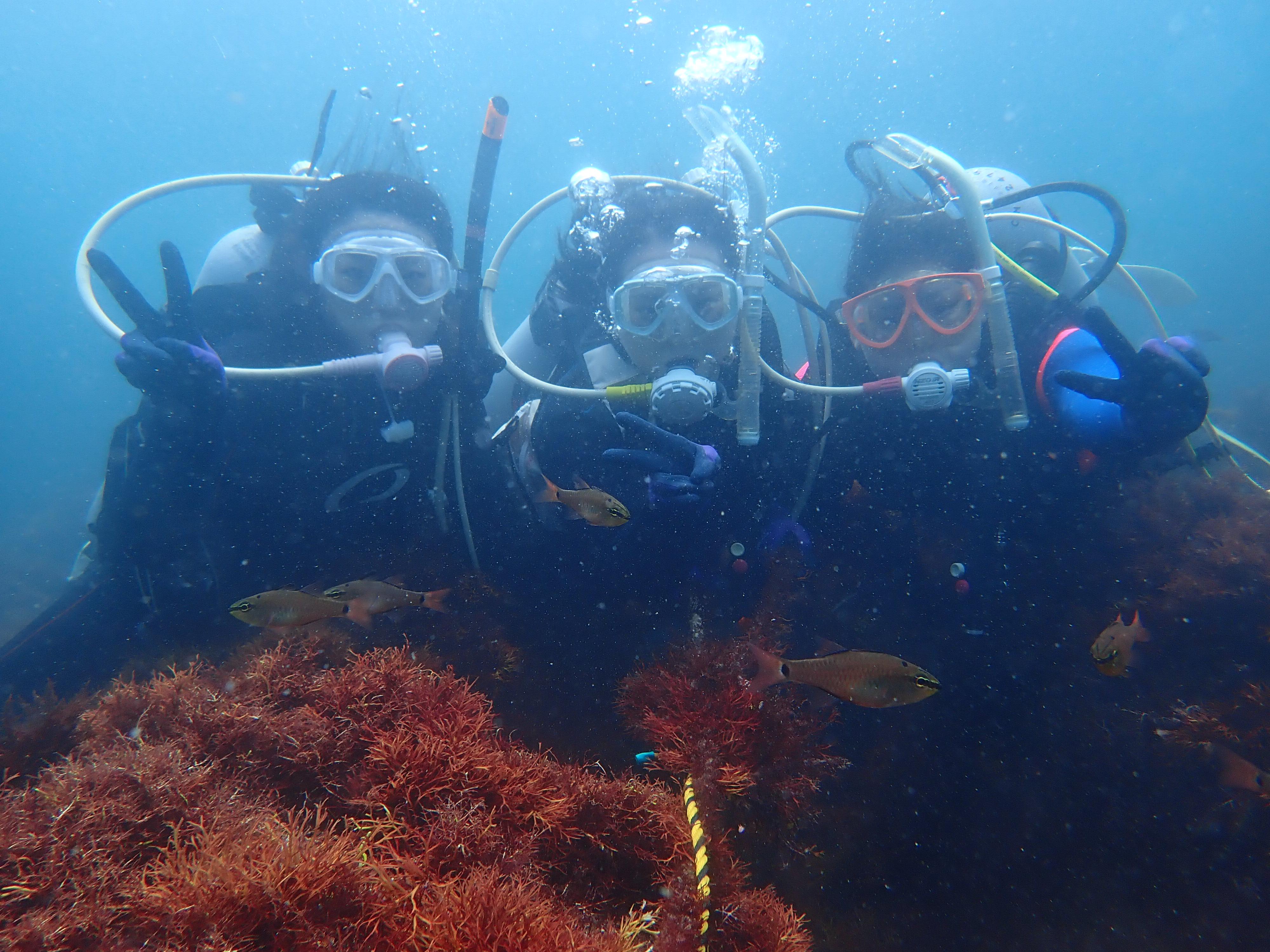 初島体験ダイビング