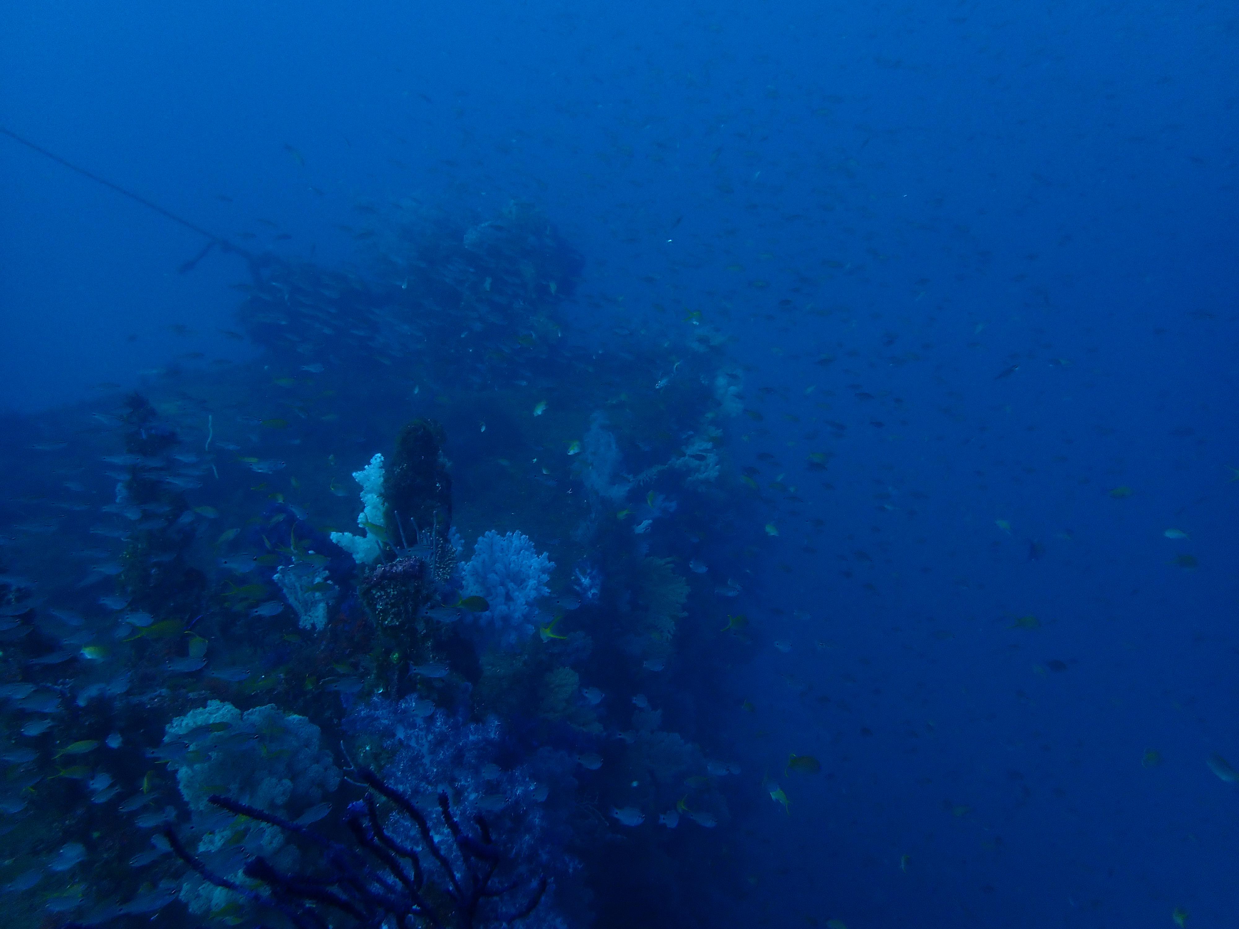 熱海沈船ファンダイビング